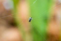 De spin vlecht het Web Stock Afbeeldingen