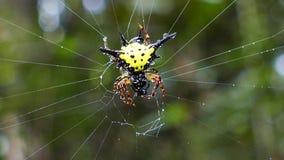 De spineieren maakten na regen schoon stock video