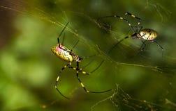 De spinnen bouwen netwerk Stock Afbeelding