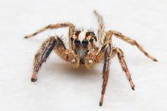 De spinnen zijn niet bang van regen Royalty-vrije Stock Fotografie