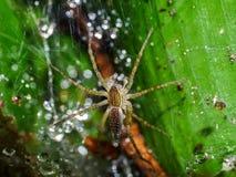 De spinnen zijn op het spinneweb Royalty-vrije Stock Foto's