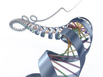 De spiraal van DNA Royalty-vrije Stock Afbeeldingen