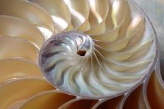 De spiraal van Nautilus Royalty-vrije Stock Fotografie