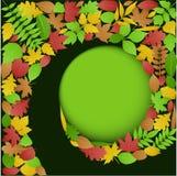 De Spiraalvormige Achtergrond van de Bladeren van de herfst Royalty-vrije Stock Fotografie