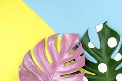 De spleetbladeren van de pastelkleur roze en witte stip op kleurrijke backgro royalty-vrije stock foto's