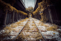 De spoorweg van de boomtunnel in stad Royalty-vrije Stock Afbeelding