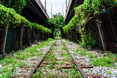 De spoorweg van de boomtunnel in stad Stock Fotografie