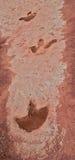 De Sporen van de dinosaurus Stock Foto
