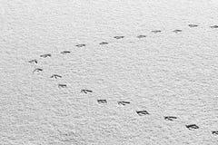 De sporen van de eend in de sneeuw Stock Foto's