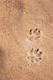 De sporen van de hond royalty-vrije stock foto's