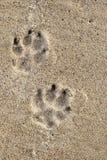 De sporen van de hond stock afbeeldingen