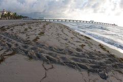 De Sporen van de schildpad op het Strand Stock Foto