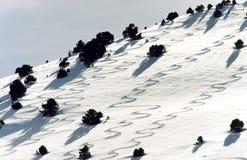 De Sporen van de ski Stock Foto