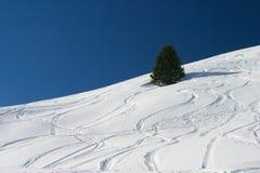 De sporen van de ski Stock Fotografie