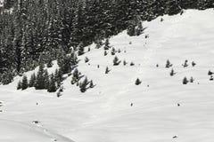 De sporen van de ski in de poedersneeuw stock foto