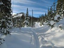 De sporen van de ski langs een bos de dienstweg Stock Afbeeldingen