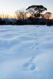 De Sporen van de sneeuw Stock Afbeeldingen