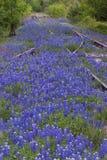 De Sporen van de spoorweg in Bluebonnets stock fotografie