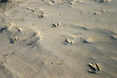 De Sporen van de vogel in Zand Royalty-vrije Stock Foto