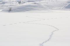 De sporen van de vos Stock Afbeelding