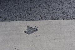 De sporen van het esdoornblad op weg stock foto's