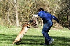De sport van de hond Stock Afbeeldingen