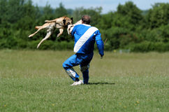 De sport van de hond Stock Foto