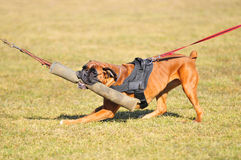 De sport van de hond Stock Afbeelding