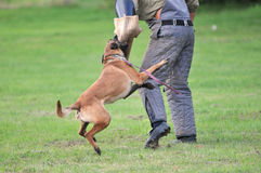 De sport van de hond Royalty-vrije Stock Afbeelding