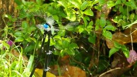 De sproeier bespuit water stock video