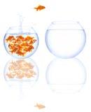 De sprong van de goudvis Stock Afbeelding