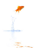 De sprong van de goudvis Royalty-vrije Stock Foto's