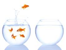 De sprong van de goudvis Stock Afbeeldingen