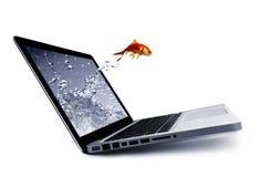 De sprong van de goudvis uit de monitor Stock Foto's