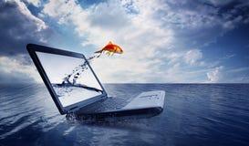 De sprong van de goudvis uit de monitor bij oceaan Royalty-vrije Stock Foto