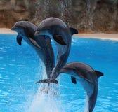 De sprong van dolfijnen uit Stock Foto