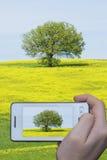 De spruit van de foto met mobiele telefoon Stock Afbeeldingen