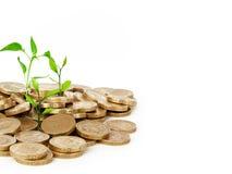 De Spruit van de geldvooruitgang Stock Afbeeldingen