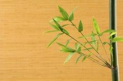 De spruit van het bamboe Royalty-vrije Stock Afbeelding