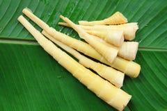 De spruit van het bamboe op banaanblad Royalty-vrije Stock Foto