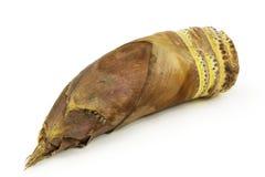 De spruiten van het bamboe Royalty-vrije Stock Fotografie