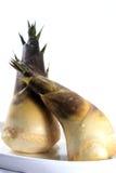 De spruiten van het bamboe Royalty-vrije Stock Afbeeldingen