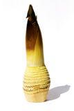 De spruiten van het bamboe stock foto's