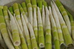 De spruiten van het Makinobamboe Royalty-vrije Stock Fotografie