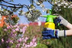 De spuitbus van de gebruikshand met pesticiden in de tuin stock afbeelding