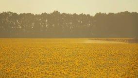 De spuitbus verwerkt de helianthusaanplanting van de pesticideaanplanting, omhoog sluit stock videobeelden