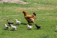 De störande fågelungarna Arkivfoto