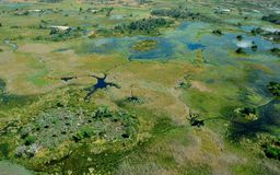De största floderna efter 46 år i den Okavango deltan Arkivbild