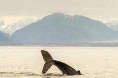 De Staart Lob van de gebocheldewalvis en Bergen stock afbeelding
