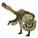 De Staart van de Citipatidinosaurus stock illustratie
